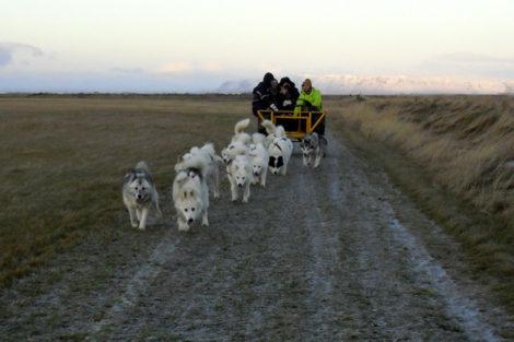 Iceland: Dog Sledding