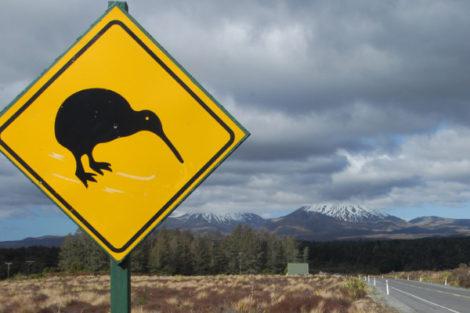 Queenstown: Kiwi Bird Enclosure
