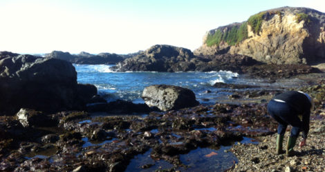Fort Bragg: Glass Beach