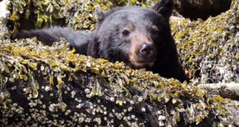 Vancouver: Bear and Whale Watching Tour