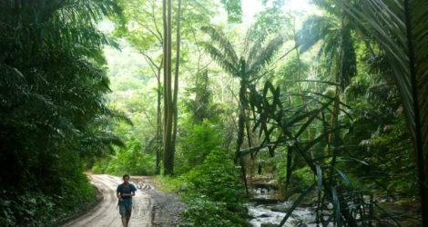 Tanga: Amani Nature Reserve