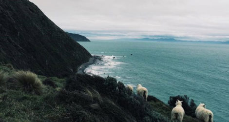 Wellington: Makara Beach
