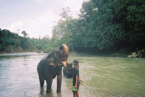 """Moderately Free"": Elephant Washing in Tangkahan"