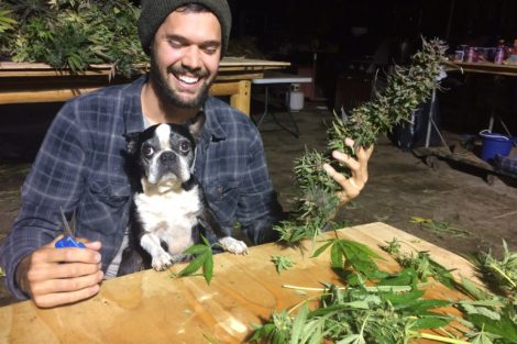 The Wild World of Weed Trimming