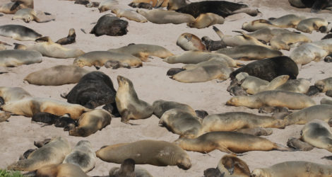 Journey to the Auckland Islands
